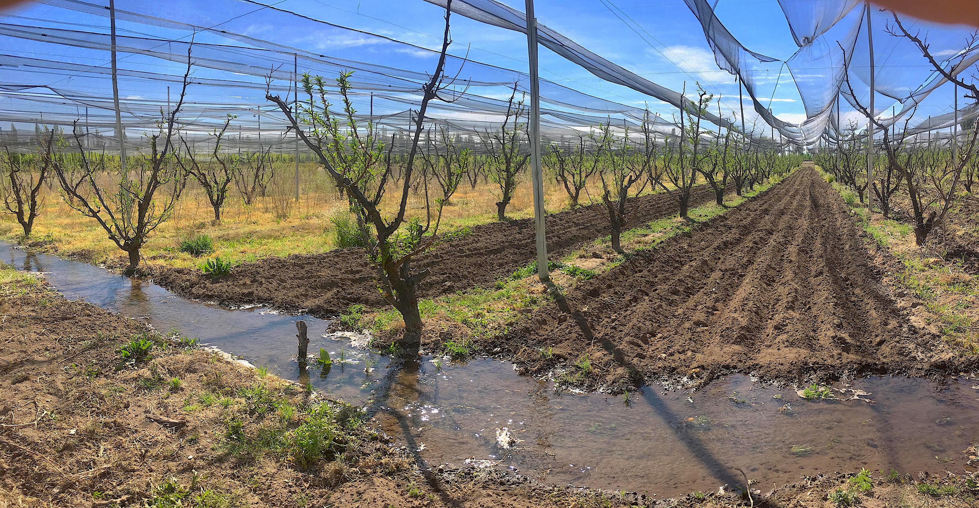 plum_orchard