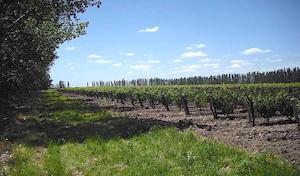 fine_wine_vineyard